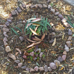 Andy Goldsworthy inspired natural sculptures by students at Walkerville Primary School, WA